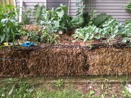 gardening sustainable williston