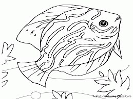angel fish coloring page many interesting cliparts