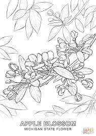 michigan state flower coloring page free printable coloring pages