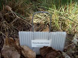 native plants in alberta other native plants of alberta the interscience cup