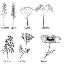 All Types Of Flowers List - 3 botany nc state extension publications