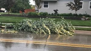 trees other damage in omaha metro because of kptm