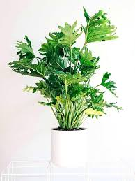 Indoor Plants That Don T Need Sun Best Office Plants For Low Light Plants Collage 15 Plants That