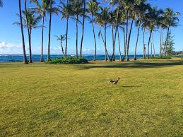 brubunce blog archive how to slow down and have fun kauai style
