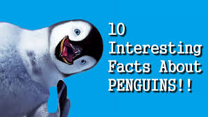10 interesting facts about penguins hd