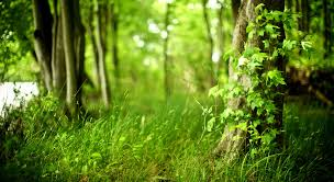forest wallpapers hd hd picturez