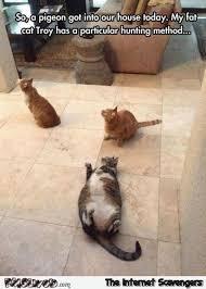 Fat Cat Meme - fat cat has a particular hunting method funny meme pmslweb