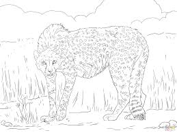 articles with cute cheetah coloring pages tag cheetah coloring