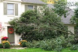 Front To Back Split House Do You Have A Dangerous Tree Houselogic Tree Maintenance Tips