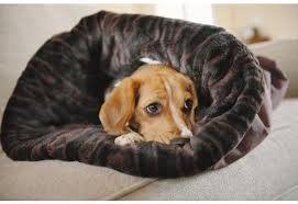 Cuddle Cup Dog Bed Dog Burrow Bed The Perfect Convertible Pet Bed For Pets To Snuggle