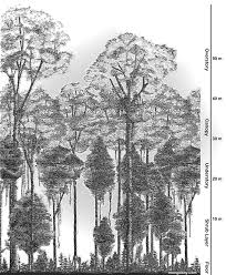 Dominant Plants Of The Tropical Rainforest - rainforests facts figures news and pictures