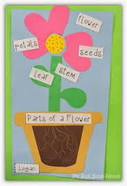 plants aplenty perfect lesson ideas pictures for teaching plants