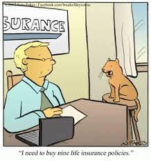 Meme Google Plus - cat humor i need to buy nine life insurance policies please