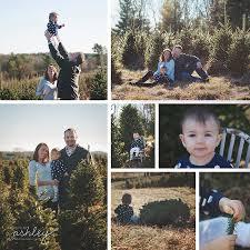 christmas tree farm sessions murphy christmas tree farm sparta