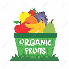 organic fruit basket vector organic fruit basket on grass illustration isolated