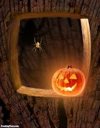 funny spiders pictures freaking news