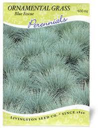 ornamental grass blue fescue
