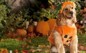 silly halloween background top 7 dogs with pumpkins animalblog
