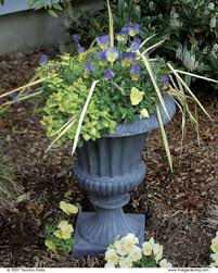 Shrubs For Patio Pots 10 Plants For Year Round Containers Fine Gardening