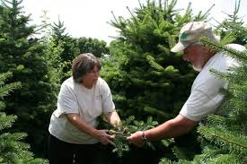 oh christmas trees two from county enter national competition