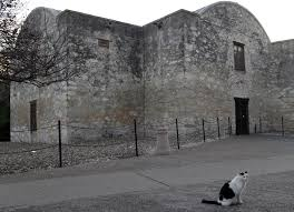 the alamo u0027s beloved cat will likely be buried there san antonio