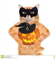 pumpkin costume halloween cat wearing costume for halloween with a pumpkin stock photo