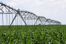 irrigated corn water issues texas corn