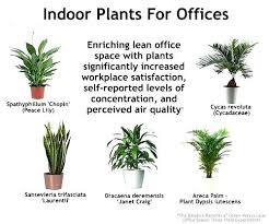best plants for air quality best plants for office good best plants for office elegant best