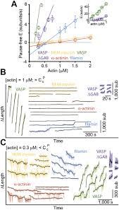 side binding proteins modulate actin filament dynamics elife