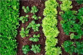 planting vegetable garden in alabama how to diy planting
