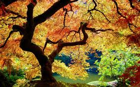 forests abstract nature colorful leafs life new bushes colours