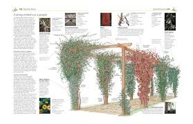 pruning and training revised new edition what when and how to