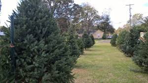 christmas tree sale opelousas lighthouse mission hosts christmas tree sale katc