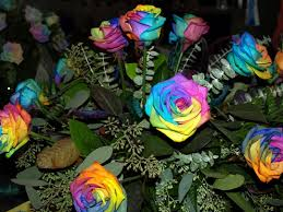 tie dye roses tie dye roses grows on you