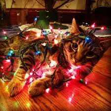 Cat Climbing Christmas Tree Video What Do You Mean You Don U0027t Want My Help Decorating The Tree