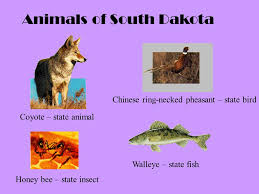 South Dakota travel symbols images Unit of study signs and symbols ppt video online download jpg