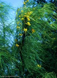 native texas plants texas native plants database