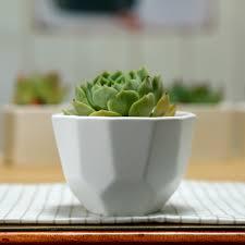 impeccable ceramic cactus bonsai mini size micro landscape