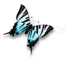 beautiful blue butterfly on a white background stock photo