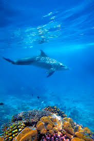 416 best animals dolphins images on pinterest animals ocean