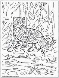 animal planet coloring pages with shimosoku biz