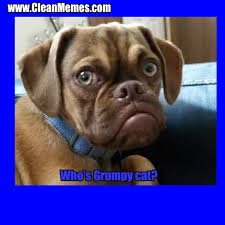 Grumpy Dog Meme - grumpy dog clean memes the best the most online