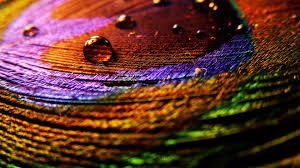 high resolution colorful peacock feather wallpaper hd 10 full size