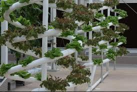 cara membuat cairan hidroponik cara membuat nutrisi pupuk hidroponik sendiri dengan mudah