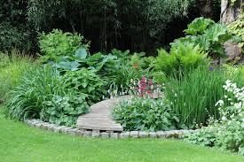 native aquatic plants uk garden design garden design with plants for gardening in a