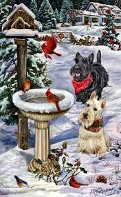 shop for cards scottish terrier