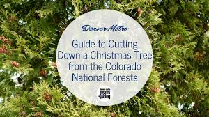 a guide to cutting down your own colorado christmas tree