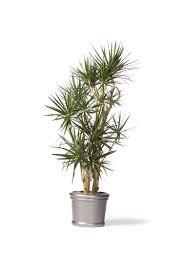 cactus garden indoor houseplants low maintenance egon walesch