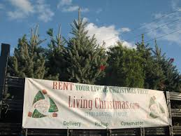 this tree farm rents christmas trees and re plants them at the end