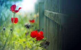 papier peint bureau pc les plus beau fond ecran fleurs fond ecran pc